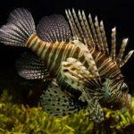 Aquarien Fische