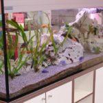 aquarium-ladengeschaeft-freiburg-01