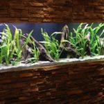 aquarium-restaurant-waldshut-01